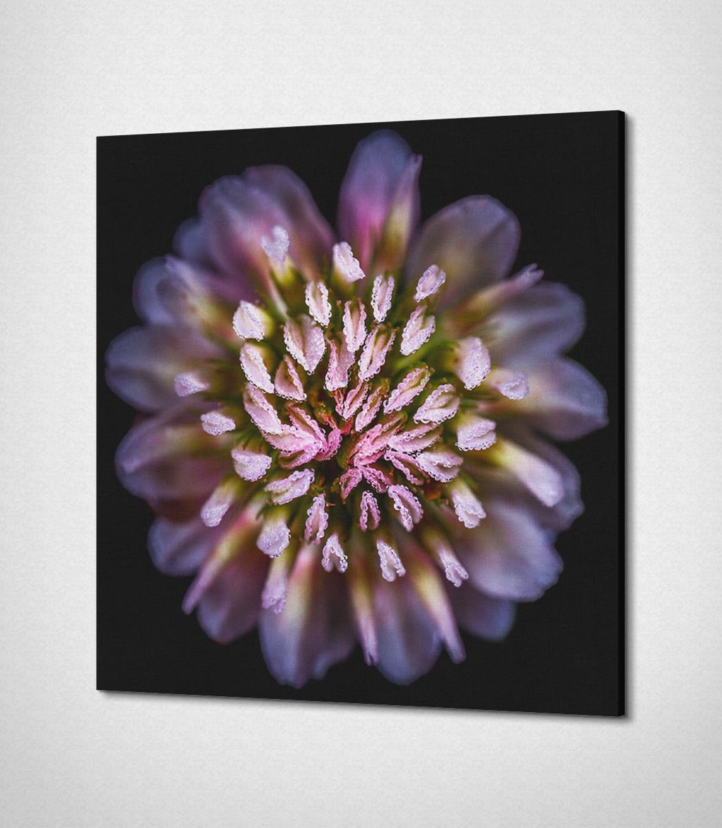 Multicolored Flower Canvascanvas
